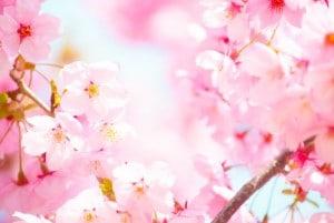 171120_桜